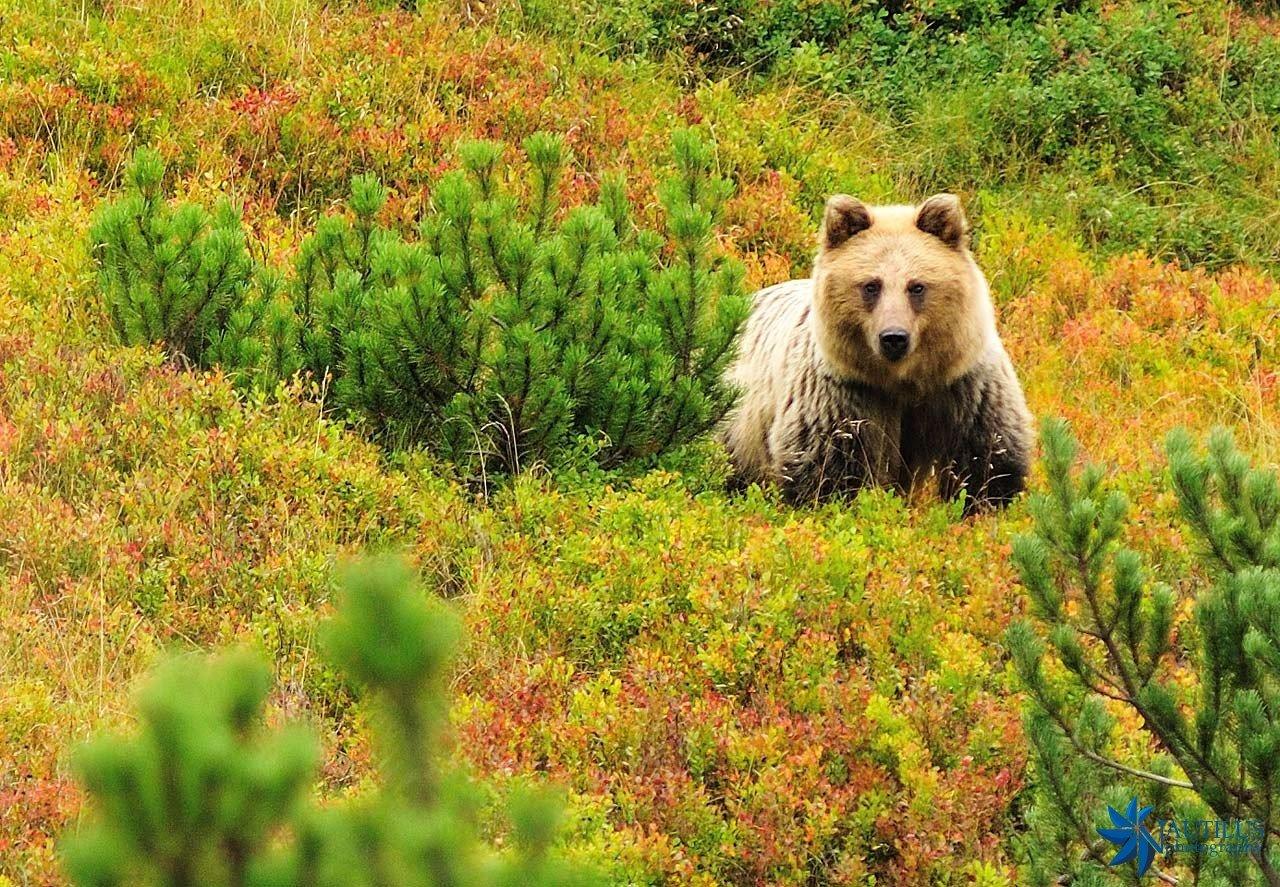 Weekend w Tatrach, niedźwiedź na szlaku