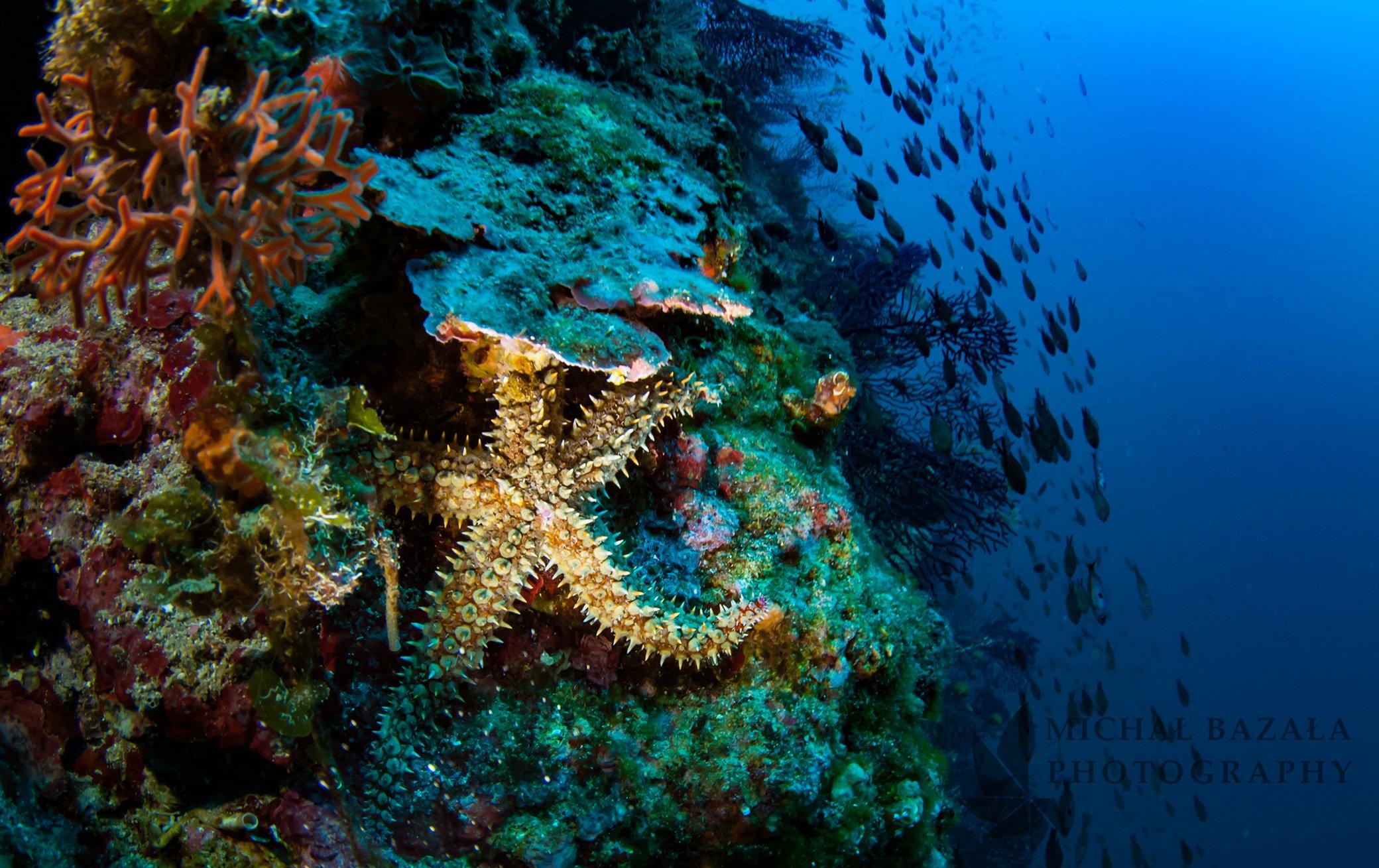 Wyspa Murter i nurkowanie na archipelagu Kornati
